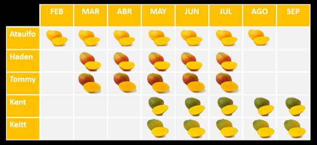 Temporadas y Tipos de Mango en México | EMEX AC